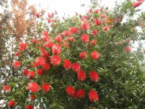 お花が満開です^^